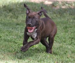 Buster **Adoption Pending**