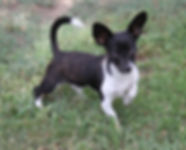 Wally **Adoption in Process**