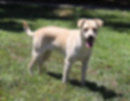 Jazzy  **Adoption in process**
