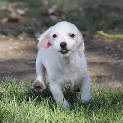 Stella3
