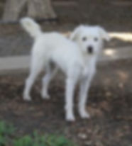 Patsy  **Adoption in process**