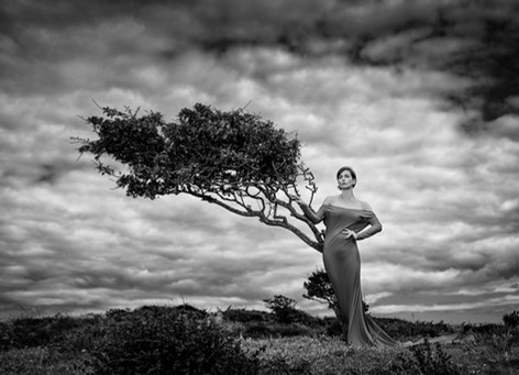 'The Fashion Tree' by Ross McKelvey - Accepted