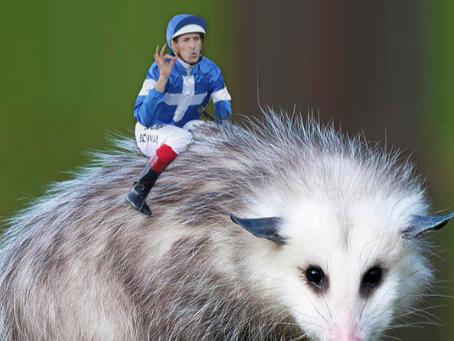 Possum Jockeys!