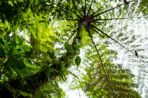 low-angle-view-tree-tropical-rainforest-costa-rica_23-2148248808.jpg