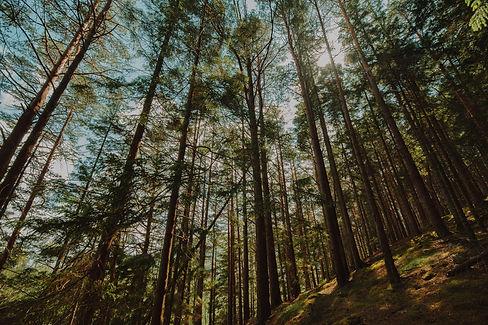 bottom-view-group-trees.jpg