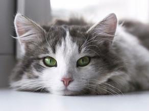 Co znamená, když kočka přešlapuje