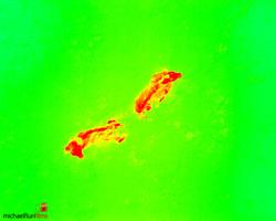 Wärmebildaufnahme Rehkitzrettung