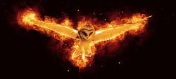 Photoshop Flammen: Eule