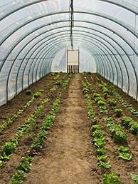 Venkateshwara Poly House Farming.jpg