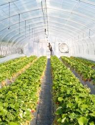 Venkateshwara Poly Farming Project.jpg