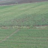 onion farming.JPG