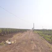 Grapes farming.JPG