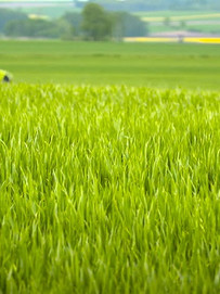 Venkateshwara Farm Project1.jpg