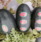 watermelon farming.jpg