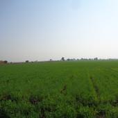 wheat farming.JPG