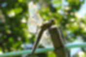 164_edited.jpg
