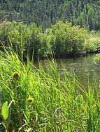 Wild Basin RMNP CO | Creekside Cabins of Colorado
