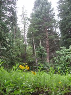 The back yard, Roosevelt Nat Forest
