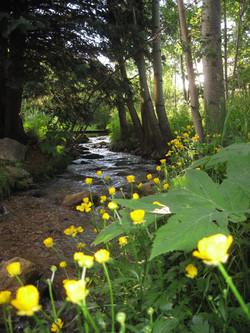 Overton's Creek