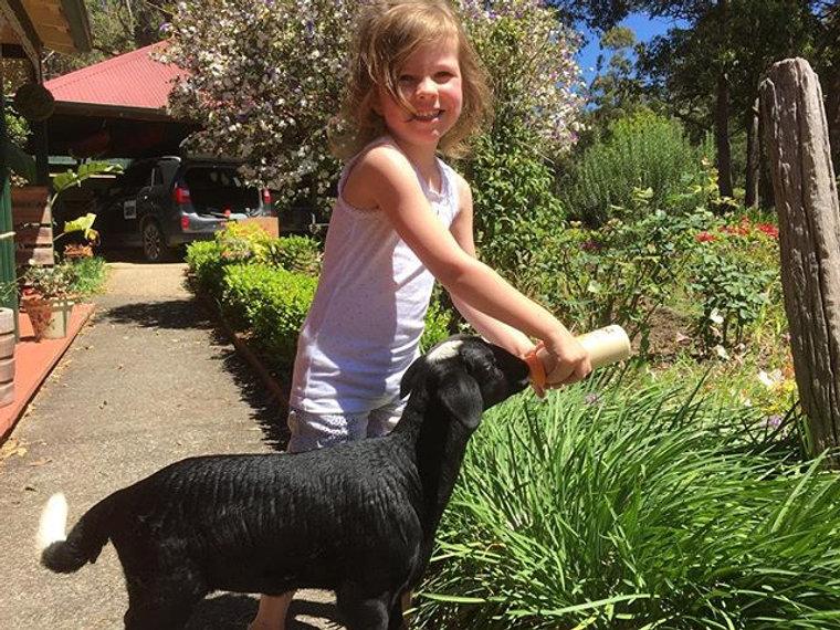 Our little lamb Saffy #portnewsphotoaday