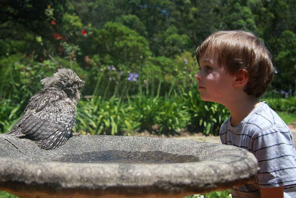 Child and tawny frogmouth owl chick