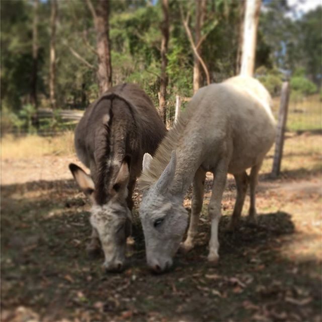 These two gorgeous girls are never far apart #truelove #greaterportmacquarie