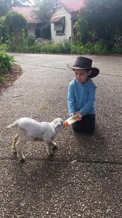 Boy feeding lamb