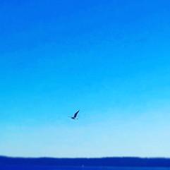 A lone bird