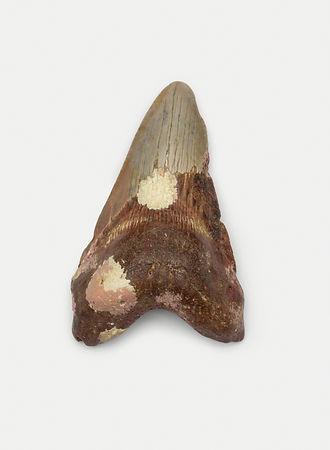 Fosiles web36.jpg