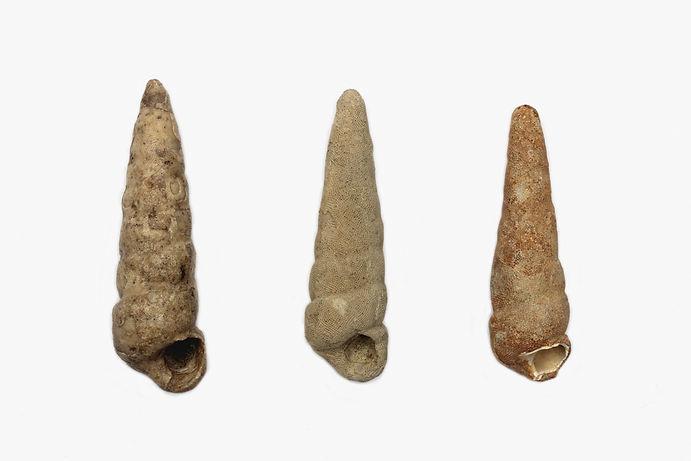 fosiles web60.jpg