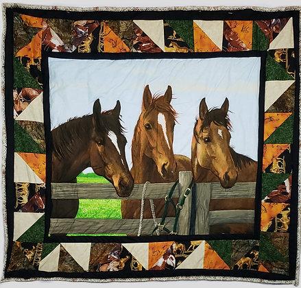 Equestrian Curiosity