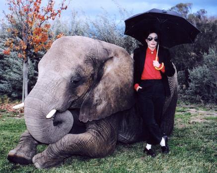 MJ outside elephant