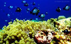 plongee-font-marin-tourisme-aux-comores-