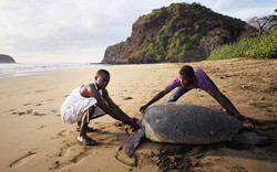 tortue-marin-itsamia-tourisme-comores-95