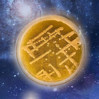 Space Yeast.jpg