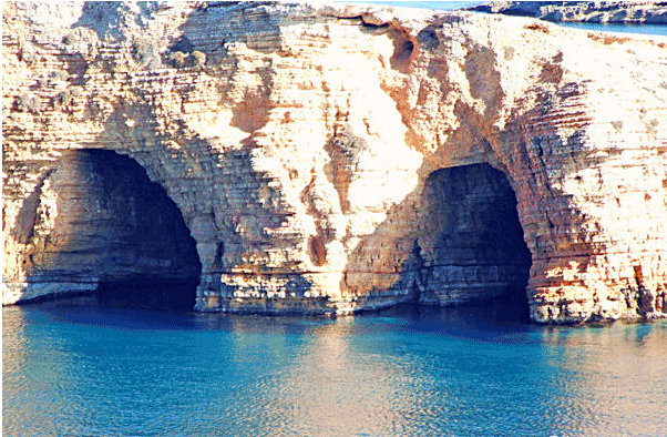 Xylobatis caves