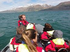 Baleine Islande