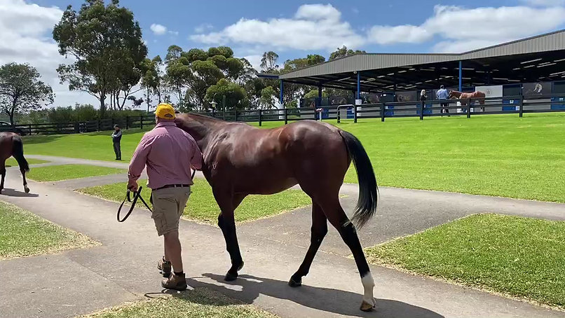 2019 Inglis Classic Yearling Sale. Lot 668 Dissident-Rose Of Traveston.