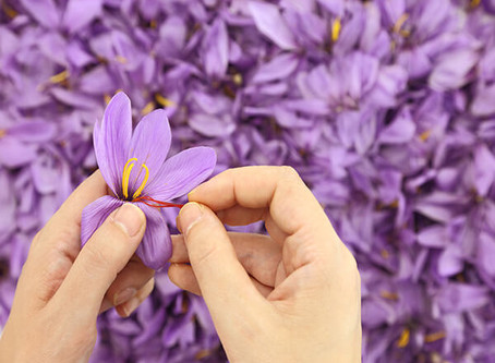 Active ingredient in saffron shows promise against MS