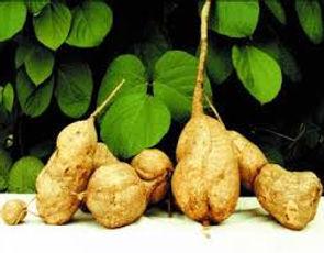 Pueraria Mirifica Capsules And Powder, Menopause