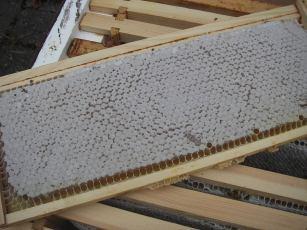 Honeycomb.jpg
