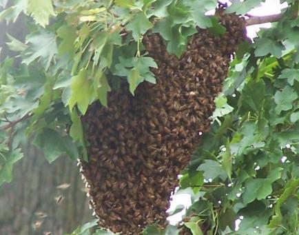 Swarming behaviour