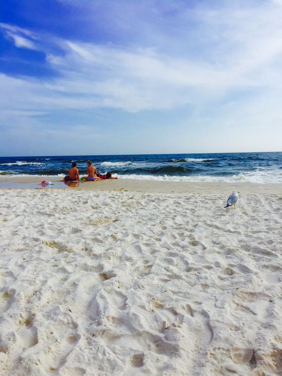 The Gulf Shores - Why Not!