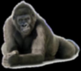 download-Gorilla-PNG-transparent-images-