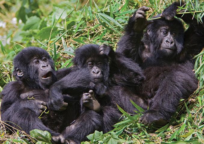 fastgstore_web_gorilla2.png