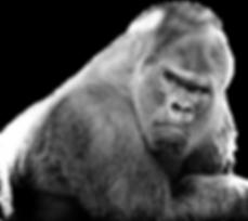 silverback-gorilla.png