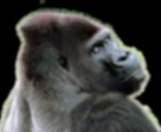 8-2-gorilla-transparent.png