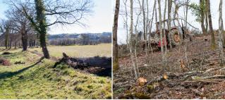 Parution de l'article sur les services et disservices de la forêt rurale dans la revue Ecosystem Ser