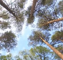 Encourager la diversité de gestion en forêt