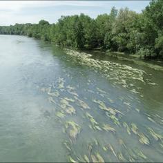 L'intelligence artificielle pour cartographier la végétation aquatique des rivières à partir d'image